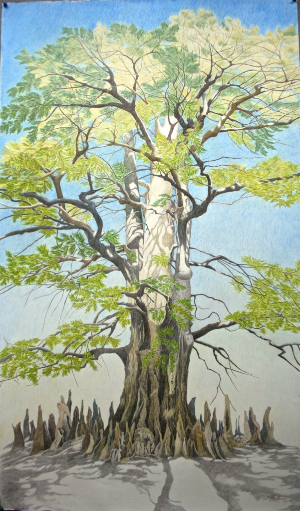 Champion Bald Cypress of Arkansas County, by Linda Williams Palmer