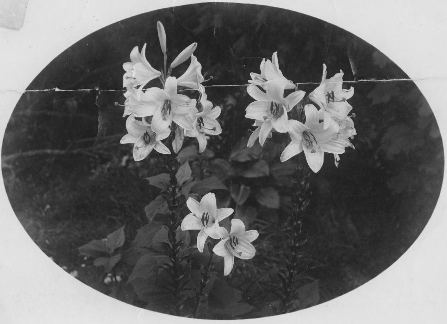 Flowers (1024x767)