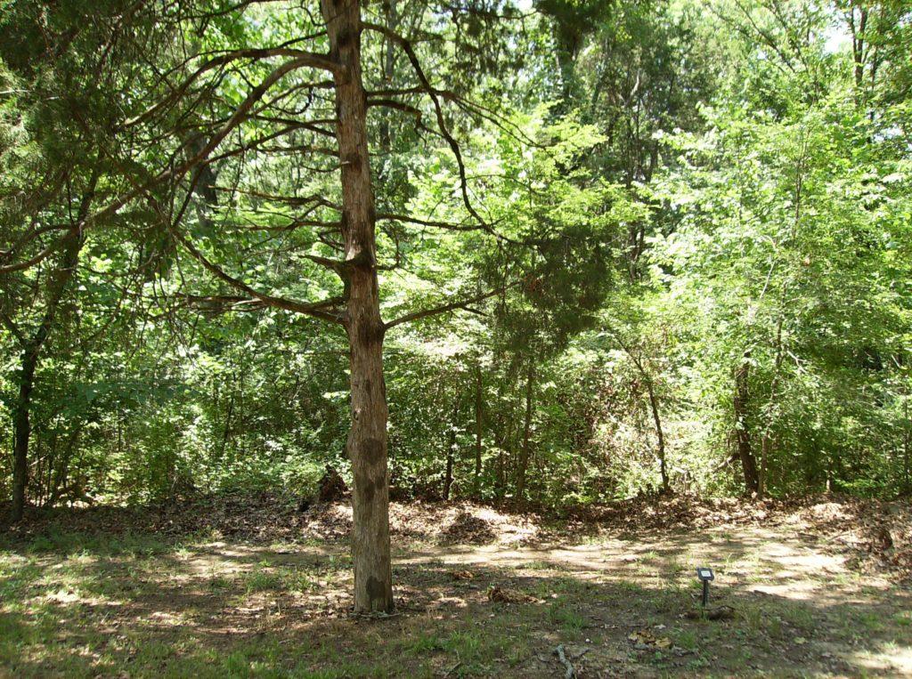 34 Graveyard Cedar and Cicero Marker